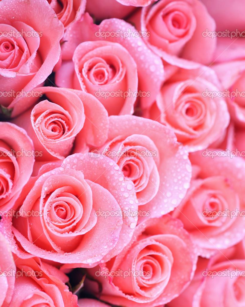 hintergrundbild von rosa rosen mit wassertropfen stockfoto kamonrat 40495285. Black Bedroom Furniture Sets. Home Design Ideas