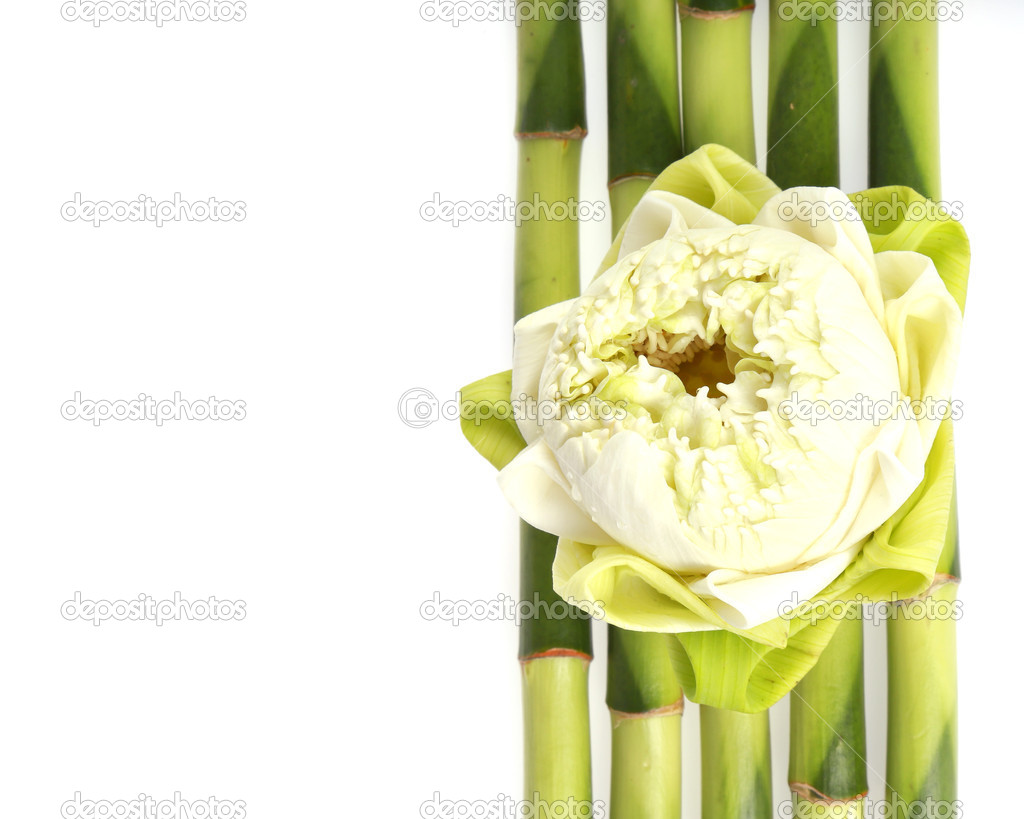 Lotus Flower On Bamboo With White Rock Concept Spa Stock Photo
