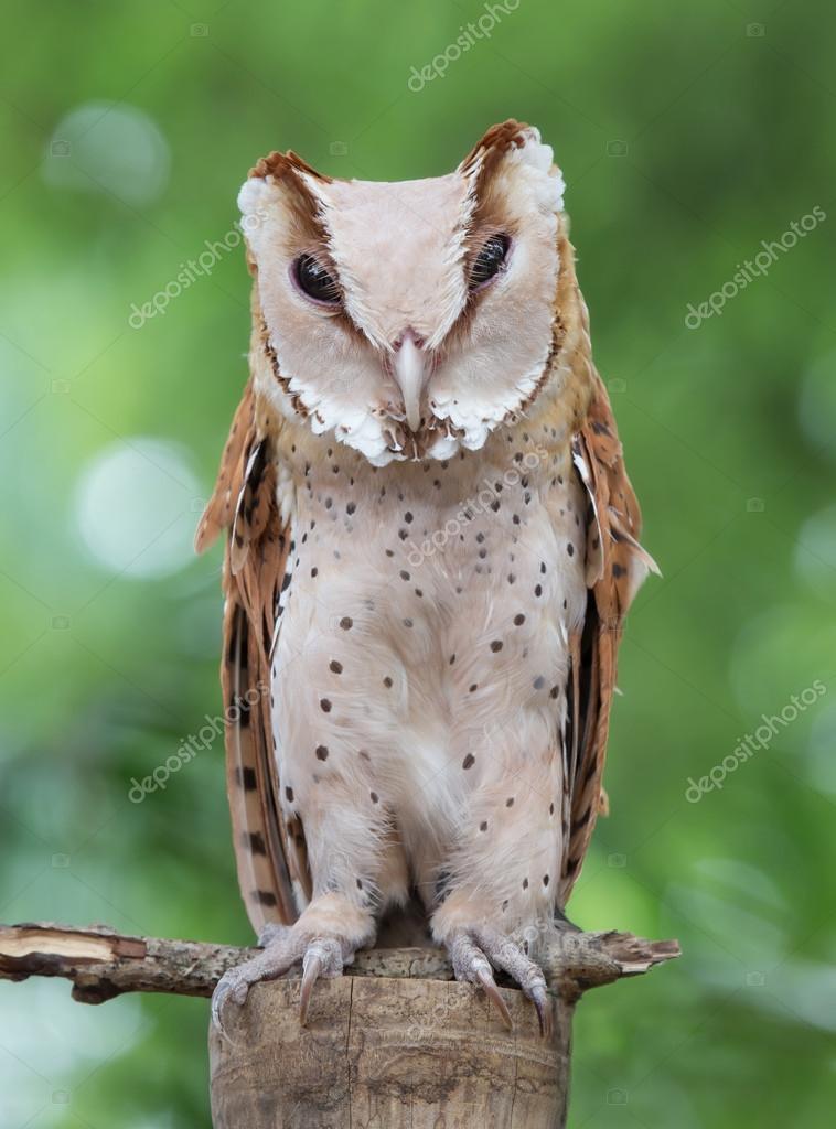 παλιό πουλί φωτογραφίες