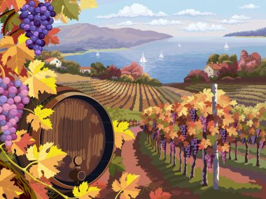 Vineyard and grapes bunches