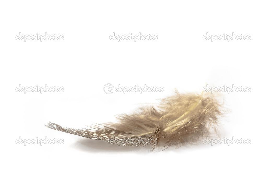2ae83829e5fa3 léger comme une plume — Photographie LKoch ©  42664035