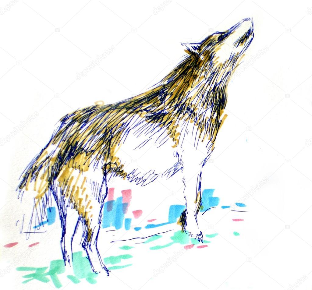 Dibujos Lobos A Color Dibujo Del Color Lobo Foto De Stock