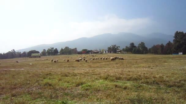 ovčí farma vedle zataženo hora