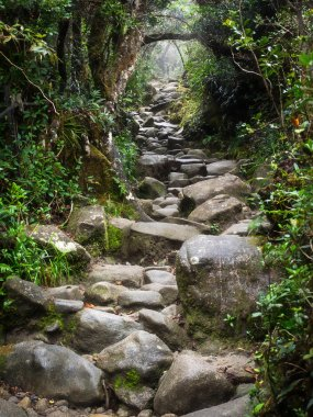 Rocky Trail at Mount Kinabalu in Sabah, Malaysia.