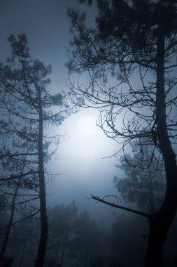 Full moon pinewood