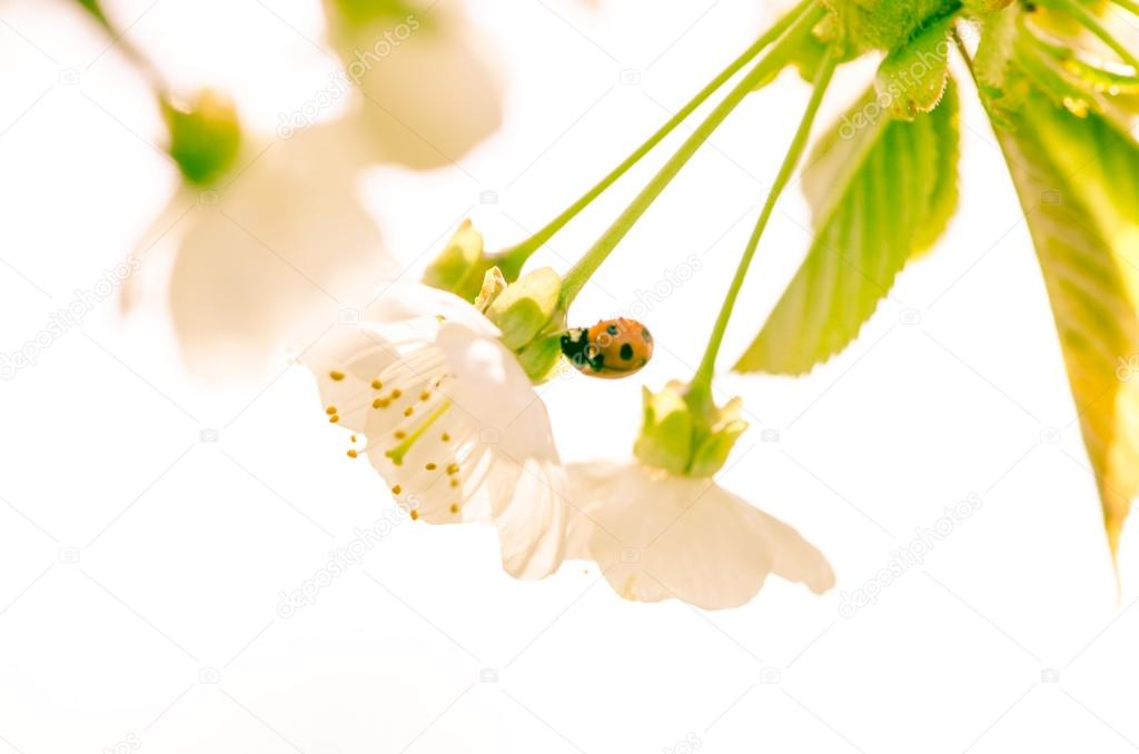 blossoming flower and lady bird
