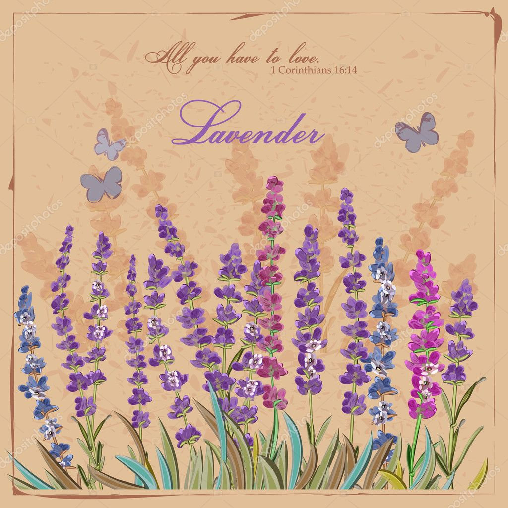 Lavender field. Card in vintage French style.