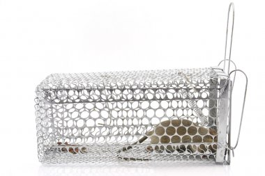 Rat in the cage trap in white background