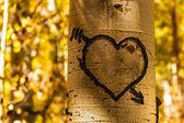 Fotografia cuori di Aspen albero