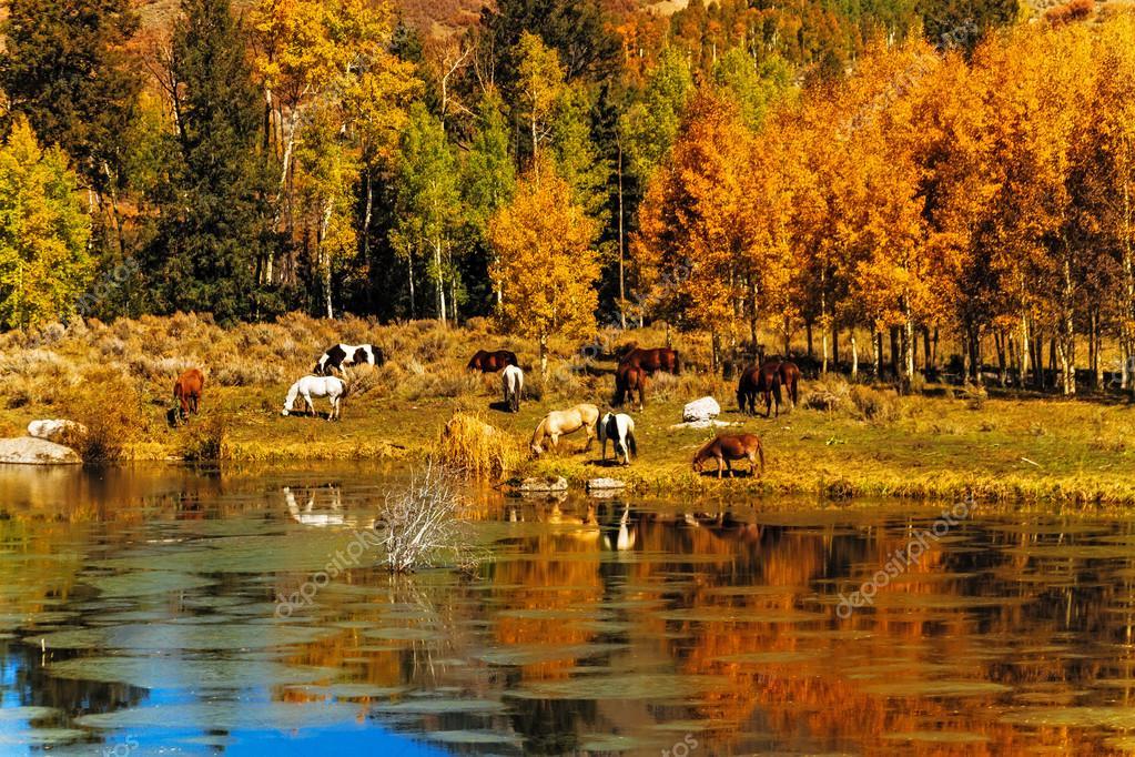 Koně ve vodě na podzim — Stock Fotografie © TeriVirbickis  34629283 3c623f31ca