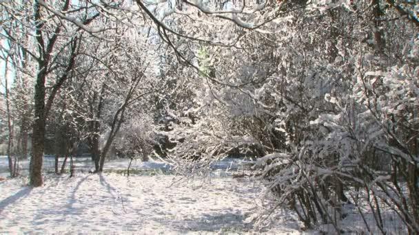 stromy ve sněhu v zimě