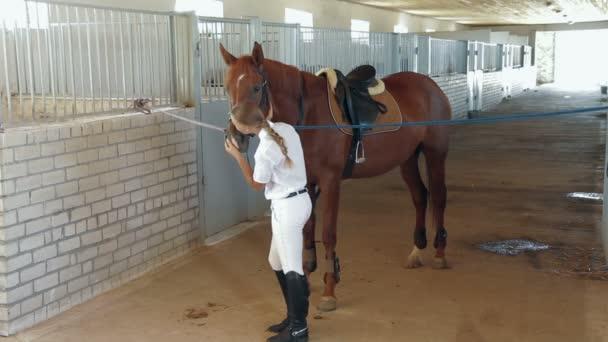 lovas sport: zsoké és a ló
