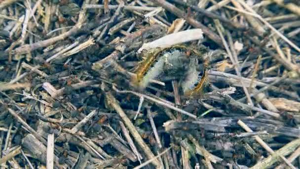 lov zvířat: mravenci