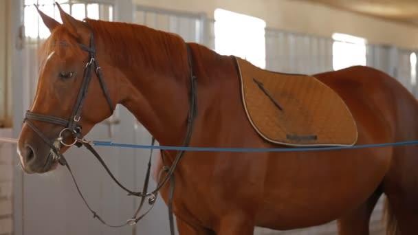 koně zařízení