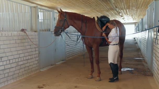 szép zsoké vezet ló