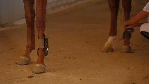 Horse Riding Preparation
