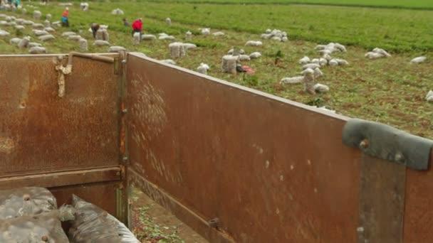 Mostra sul campo di barbabietole da ponte