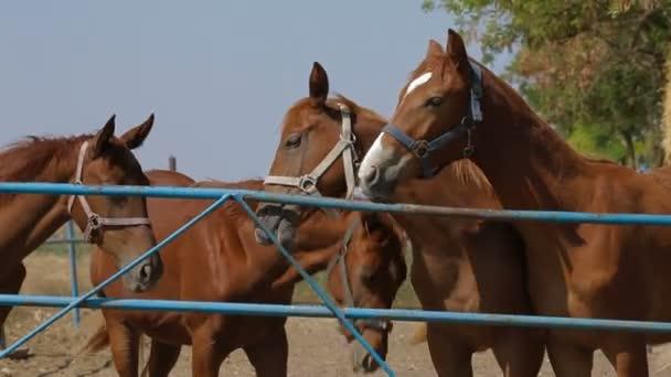 Stallions Walking In Paddock