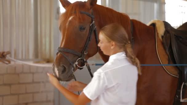 lovas és ló