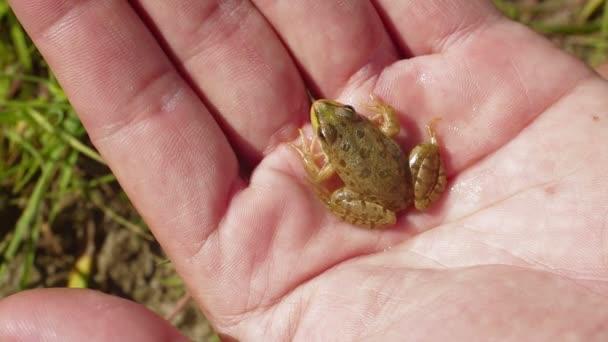 frosch in hand