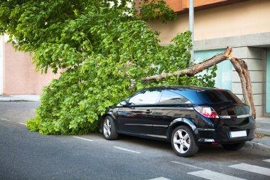 Broken tree over a car