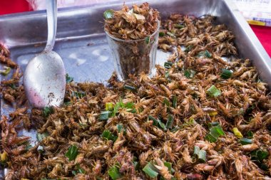 Fried crickets on Thailand local market
