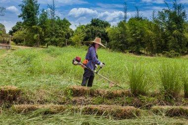 farmer is doing lawnmower