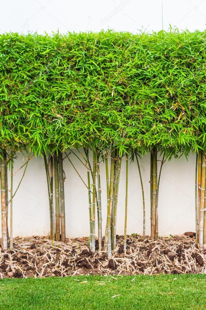 Planta de bamb y verde hierba fondo de pared en jard n foto de stock tortoon 43252407 - Jardin de bambu talavera ...