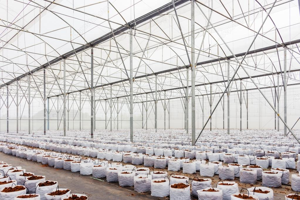 preparation coco peat in greenhouse  for cultivation vegetable