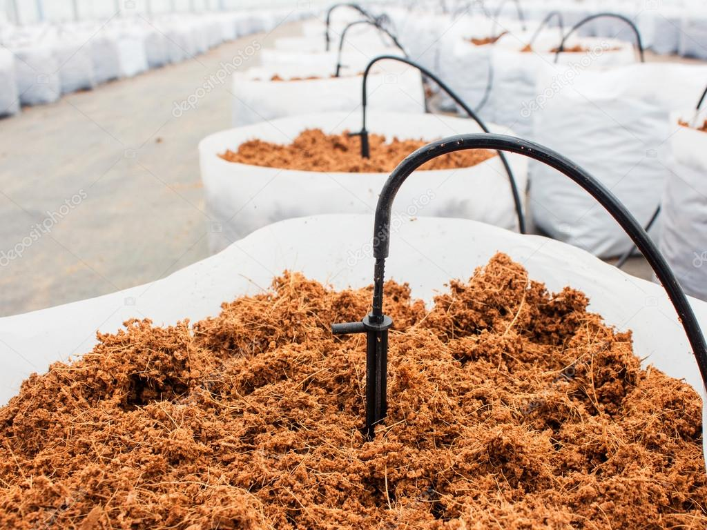 preparation coco peat for cultivation vegetable with drip irriga