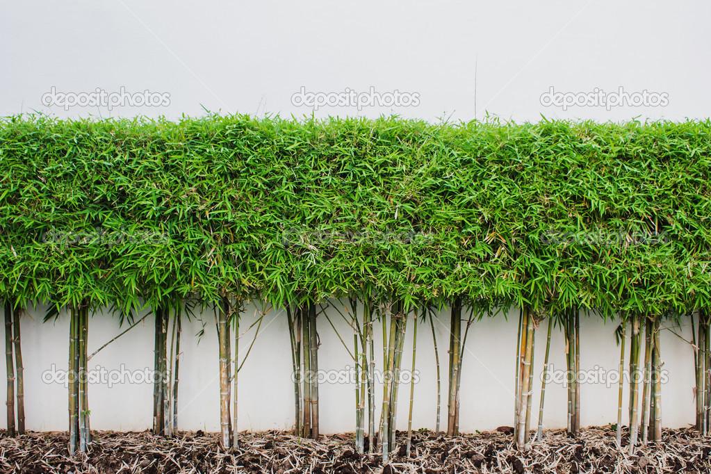Planta De Bambu Y Verde Hierba Fondo De Pared En Jardin Fotos De - Jardin-bambu