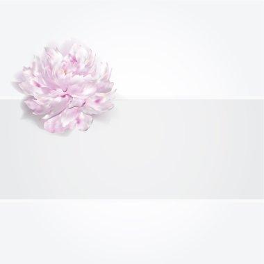Luxury pink white peony background, vector illustration, wedding birthday card invitation