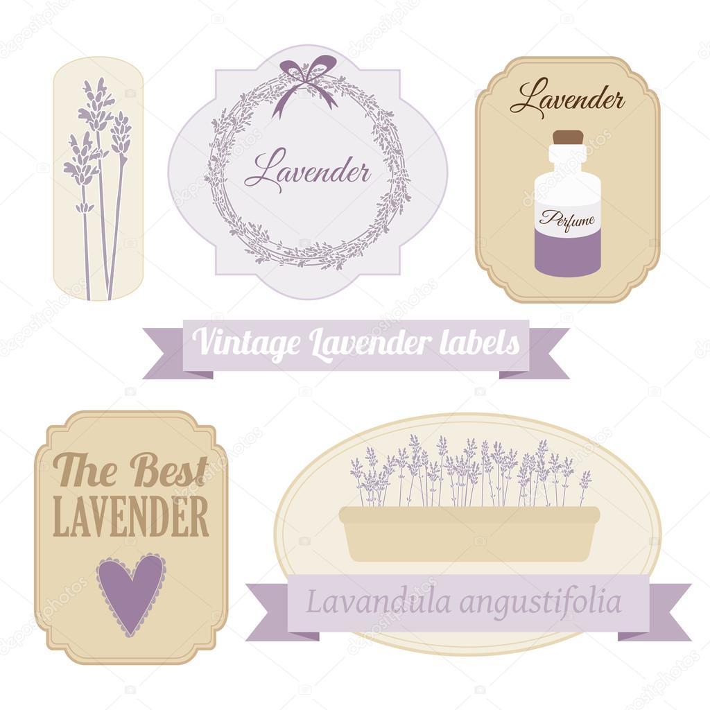 Set of vintage labels with lavender, vector illustration
