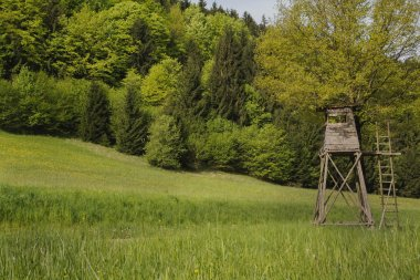 Hobby hunting: animal observation tower in the forest.
