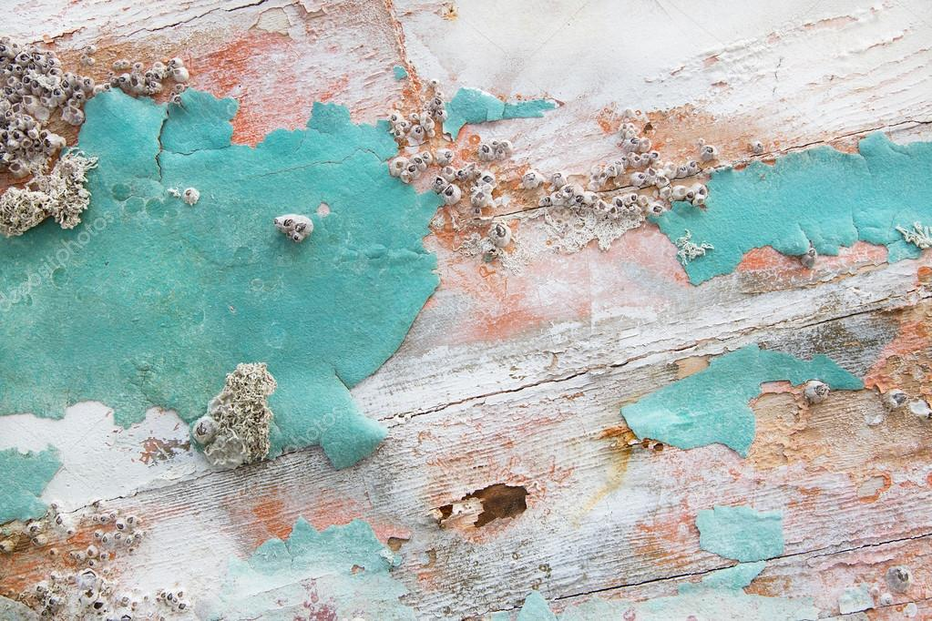 Old wooden shabby chic background with aged calcification of mus