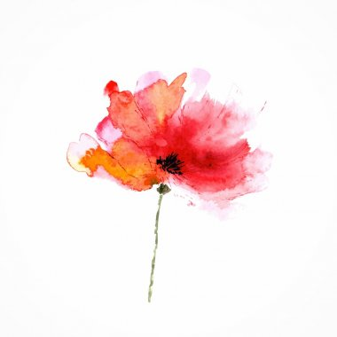 Red flower. Watercolor floral illustration. Poppy.