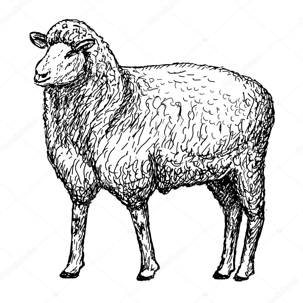 Schafe h nde zeichnen stockvektor lenaalyonushka 48365397 - Mouton a dessiner ...