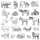 emlősök kéz rajzot