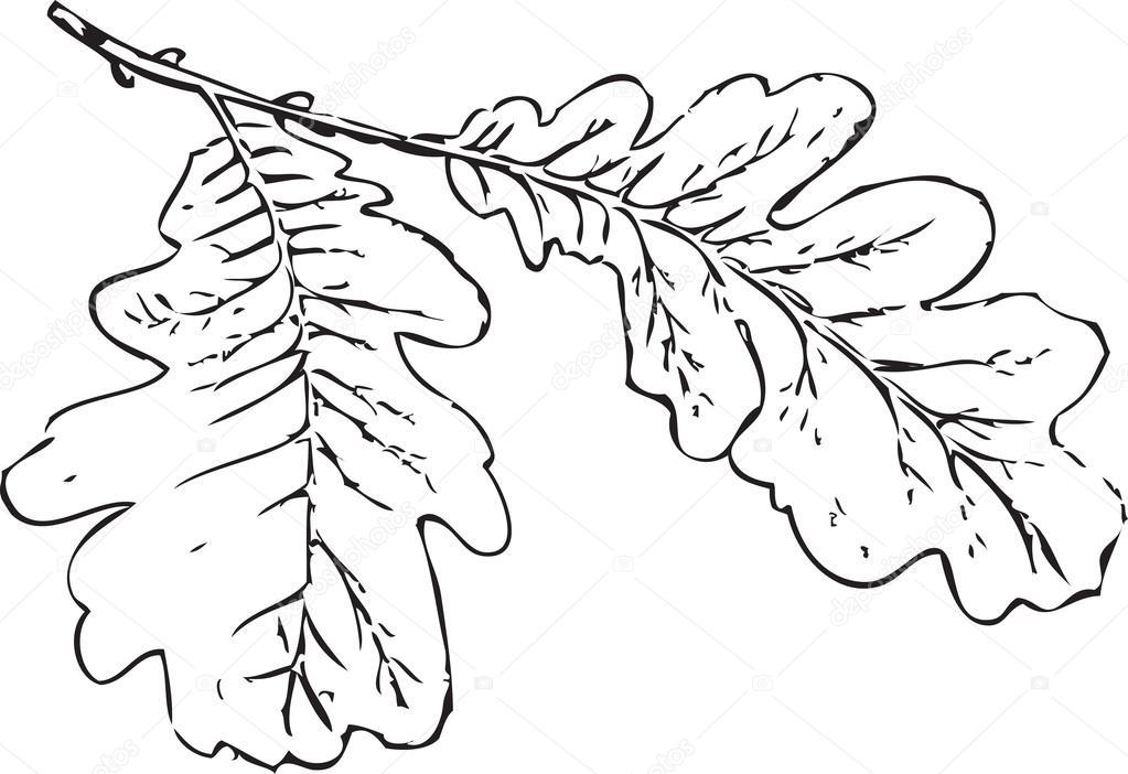 hojas del roble — Archivo Imágenes Vectoriales © Olga1983Siv1 #34255675