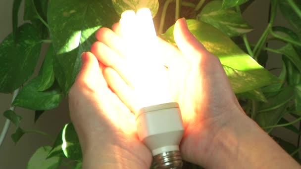 Hand holds energy saving low-energy light bulb