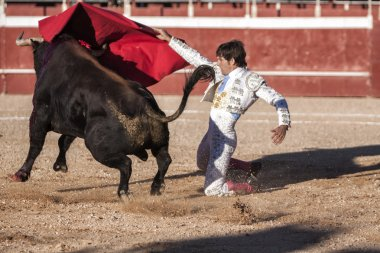 Bullfighter Alberto Lamelas bullfighting knees with your right hand gives a pass with the muleta in a very complicated position in the Bullring of Beas de segura, Jaen province, Andalusia, Spain