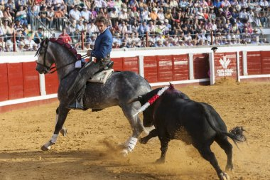 Spanish bullfighter on horseback Pablo Hermoso de Mendoza Riding sideways in a difficult maneuver while the bull pursuing him in Pozoblanco