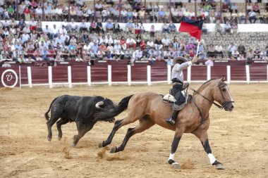 Spanish bullfighter Fermin Bohorquez bullfighting with a flag of