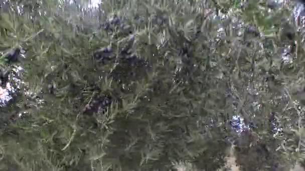 silný vítr poryvy zničit olivového háje v jaen, Andalusie, Španělsko