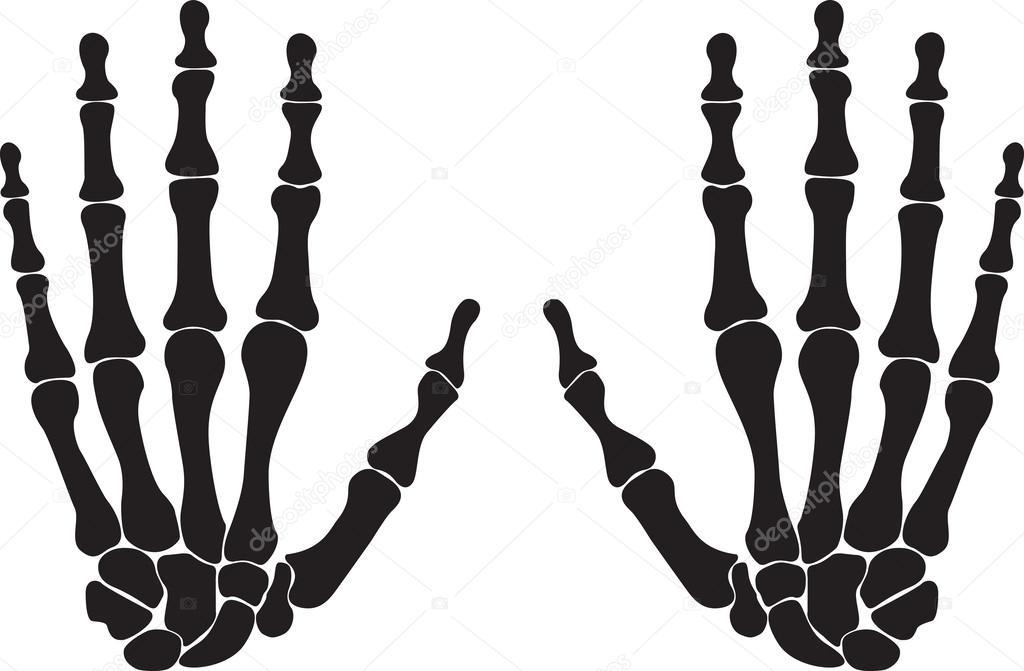 esqueleto de la mano — Vector de stock © alexghidan89 #43451075