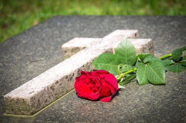 Rose on a tomb