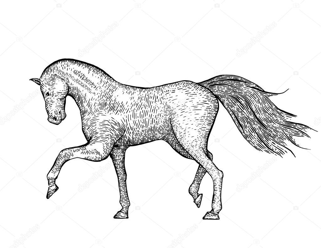 Engraved vintage horse
