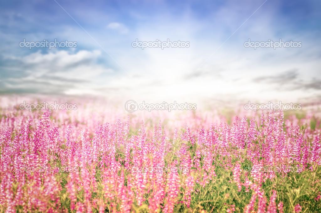 Paysage De Printemps Magnifique Avec Le Soleil Et Les Fleurs