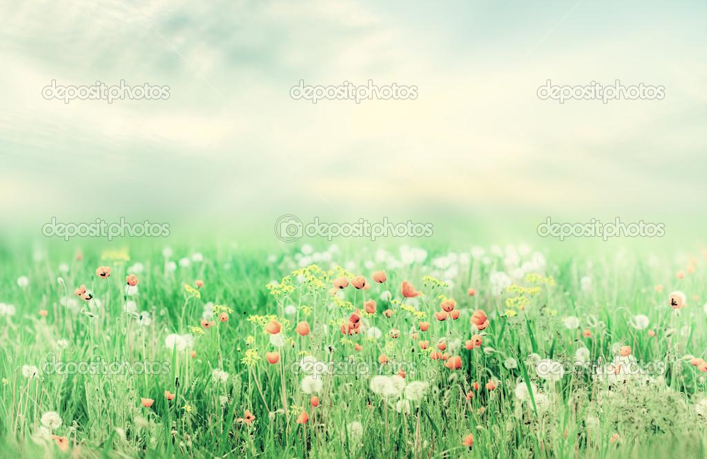 Paysage Magnifique Ete Vintage Avec Le Soleil Et Les Fleurs