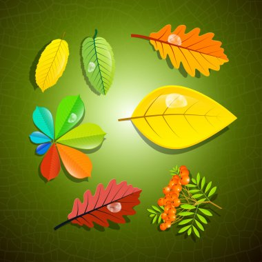 Colorful Leaves and Rowan Berry on Green Background
